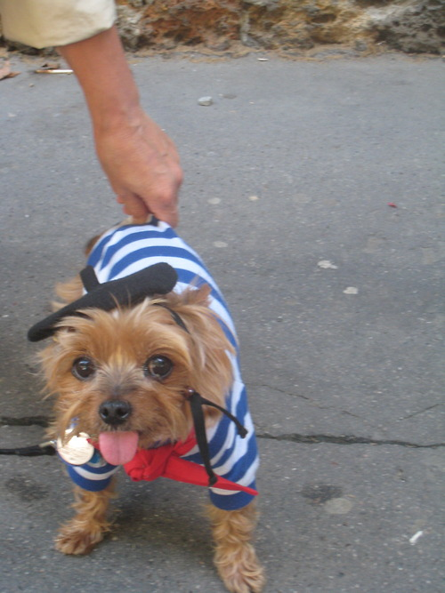 dog in Bastille Day outfit