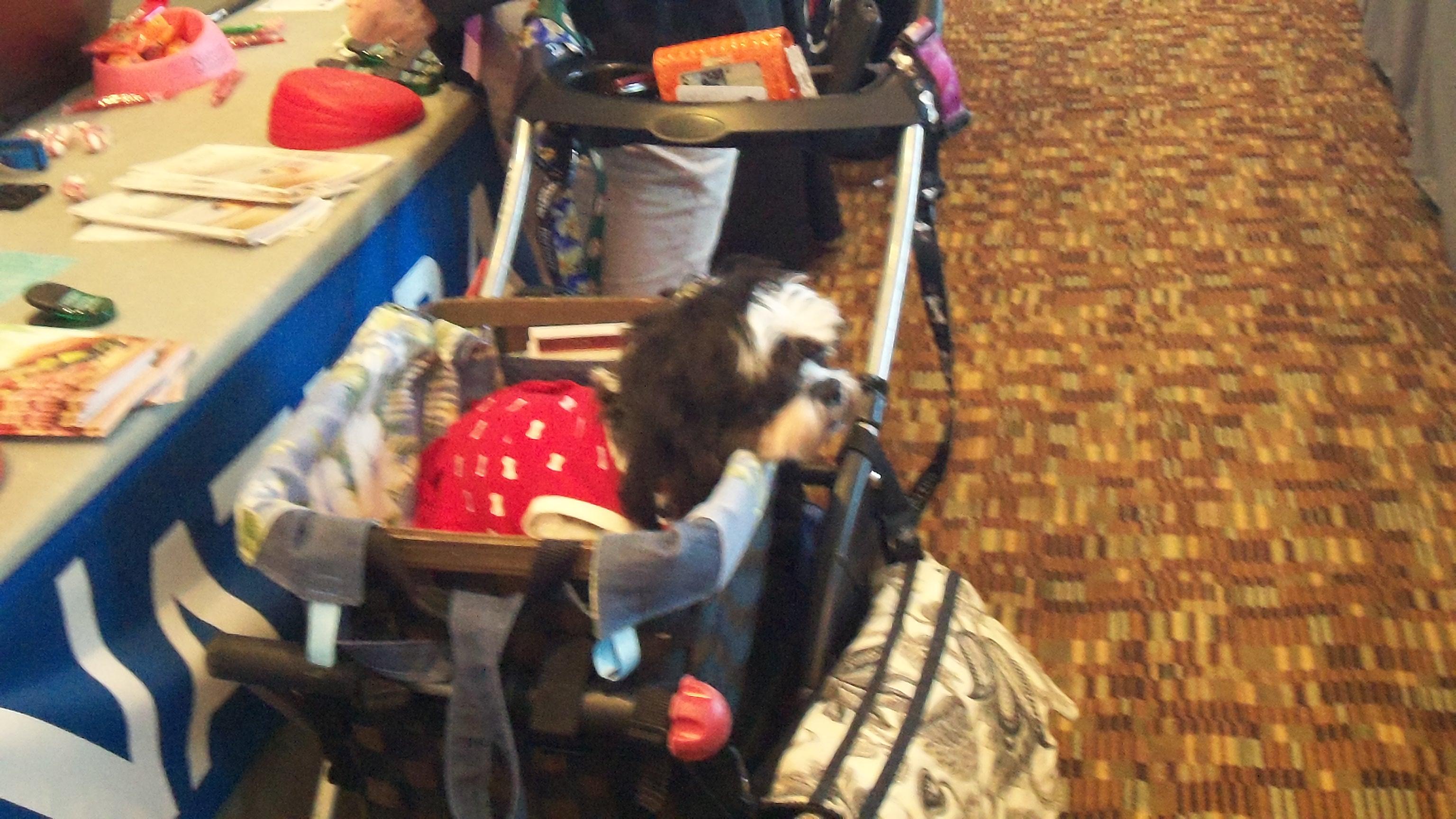 dog in a stroller at barkworld