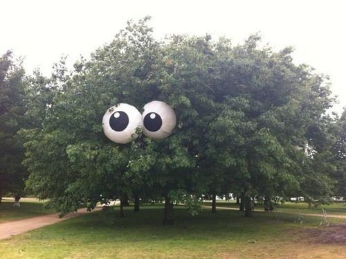 eyes in tree
