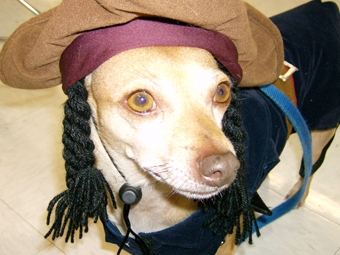 Bijou dressed as Captain Jack Sparrow
