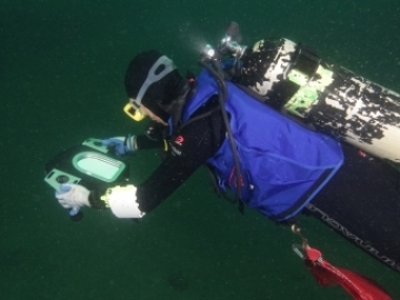 Scientists don scuba gear to study Georgia's underwater national park, Gray's Reef National Marine Sanctuary.  (photo Gray's Reef NMS)