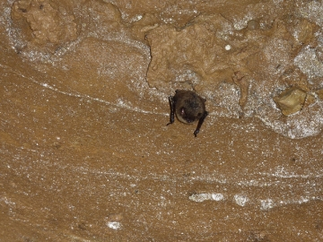 Congress funds white nose syndrome fight georgia public for Georgia fish and wildlife