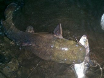 Anyone want to mo river fish or ma bass fish lakes this am for The fish omaha