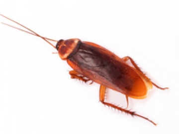Bugs that look like roaches but aren t 10