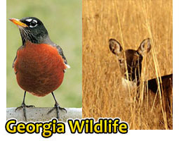 Georgia Wildlife