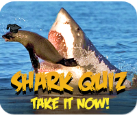 Shark Week Quiz