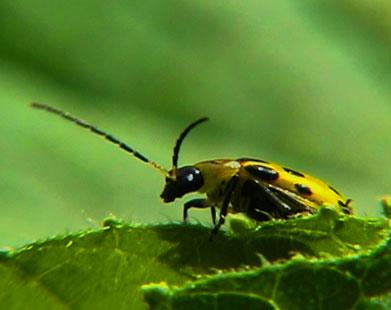 Böcek İlaçlama Kaynarca