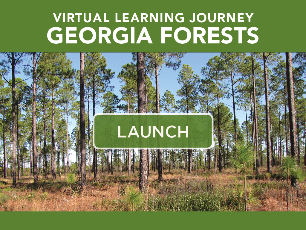Virtual Learning Journey Georgia Forests