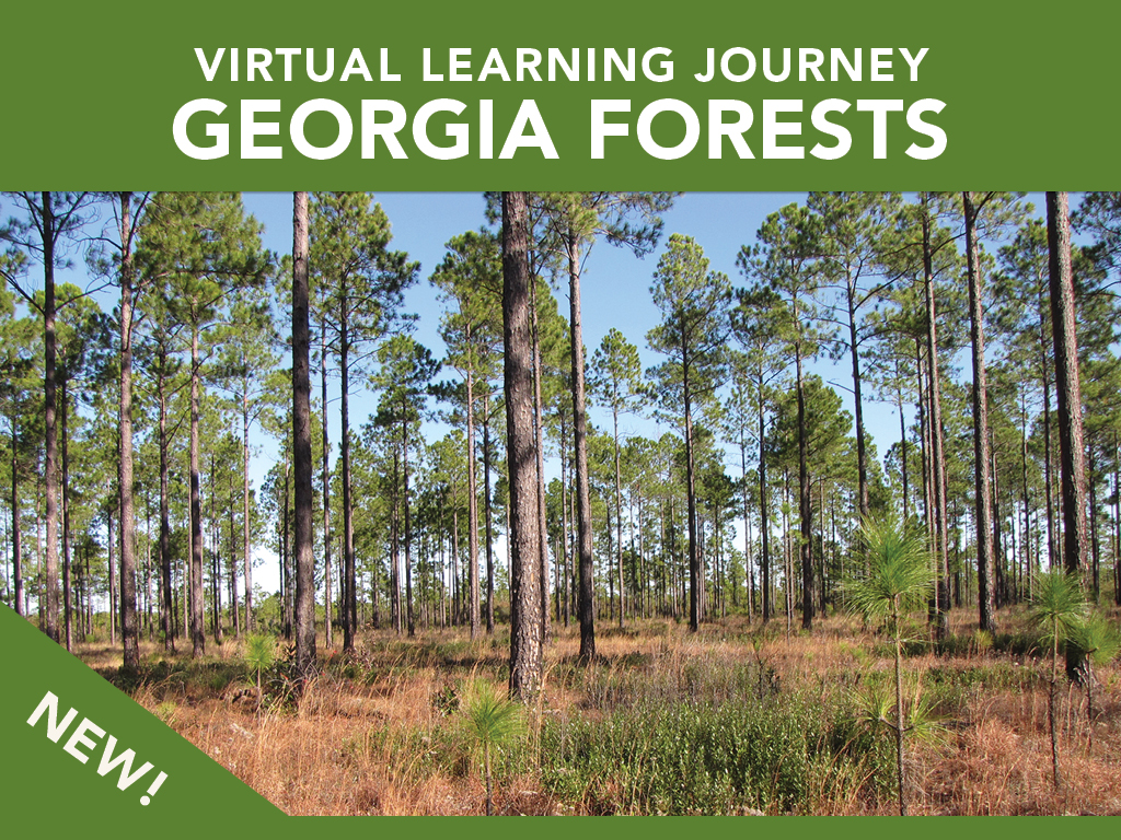 Virtual learning journey Georgia forests artwork