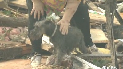 This dog was pulled from the Oklahoma tornado rubble during an interview.