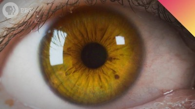 Is Your Eye Color Real?