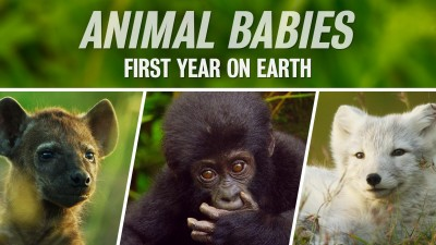 Animal Babies: First Year on Earth