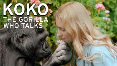Koko - The Gorilla Who Talks