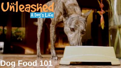Dog Food 101