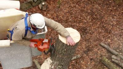 Ask TOH | Tree Removal, Garage Door Opener