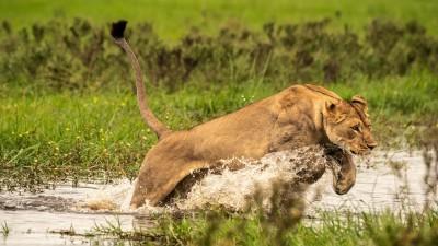 Okavango: River of Dreams - Episode 1: Paradise