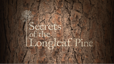 Secrets of the Longleaf Pine