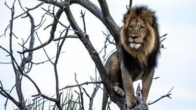 Okavango: River of Dreams - Episode 2: Limbo