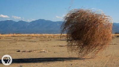 Why Do Tumbleweeds Tumble?