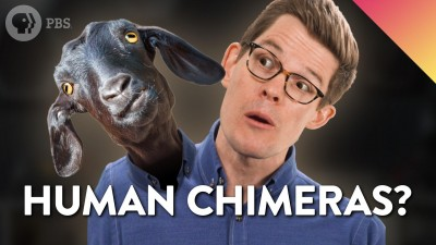 Could You Be a Chimera?