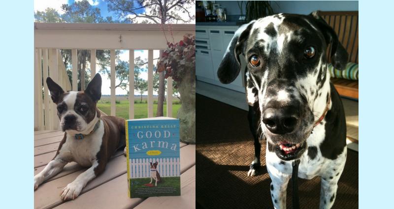 Dogs of Good Karma