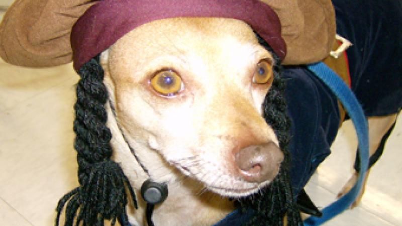 Bijou dresses as Captain Jack Sparrow at the annual Petco Halloween party.
