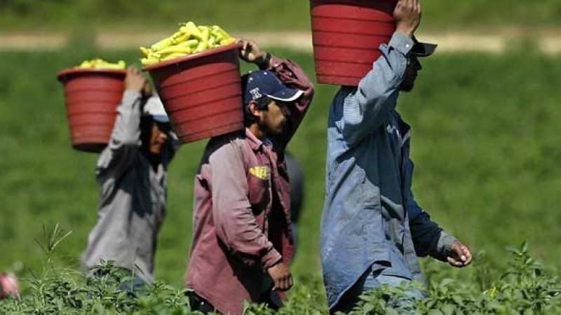 Farm Wages are Increasing Across the U.S.