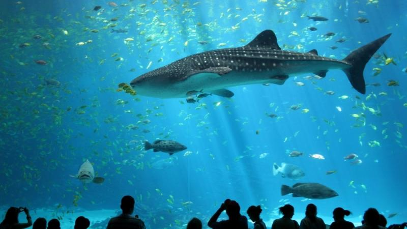 The Georgia Aquarium is on of the state's top tourist attractions