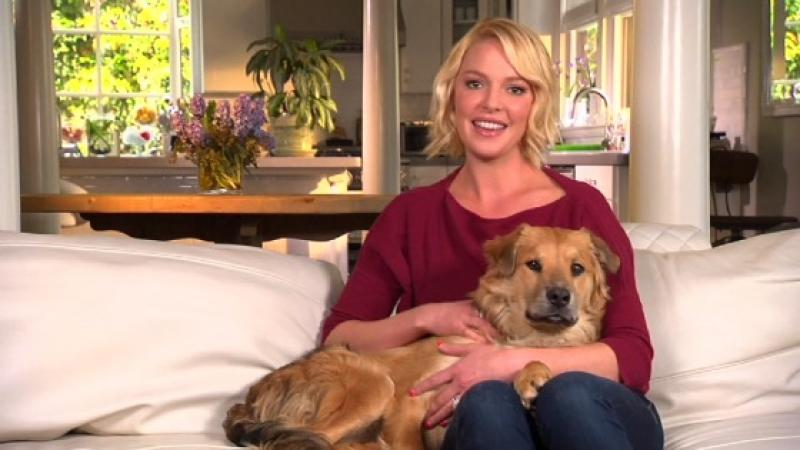 "Actress Katherine Heigl hosts ""Shelter Me."""