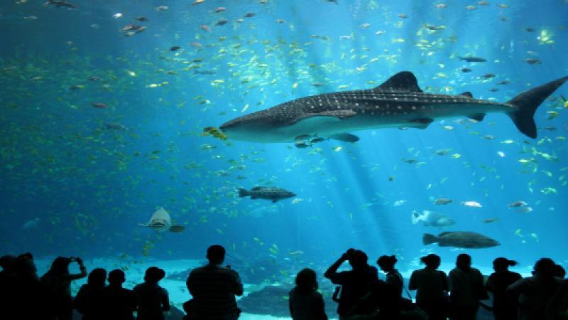 The Georgia Aquarium - Atlanta, GA