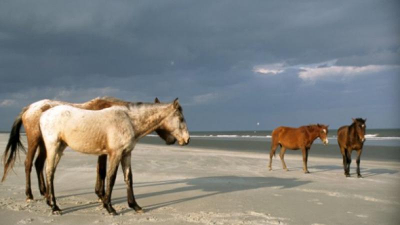 Cumberland Island where horses roan the beaches.