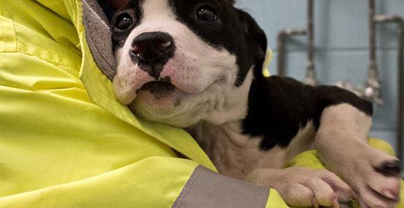 My Temporary Dog, Adventures in Fostering | Georgia Public